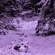 Første snevejr i Stråsø 2017
